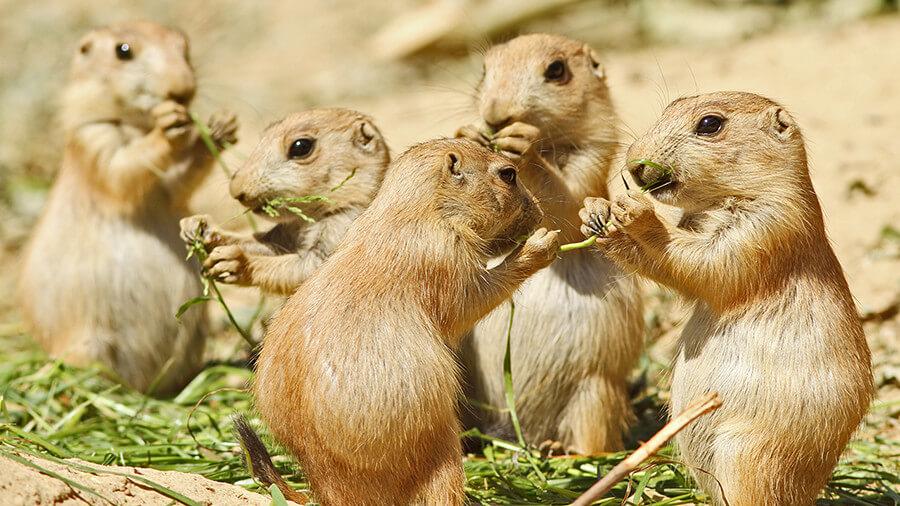 chipmunks-eating-lunch
