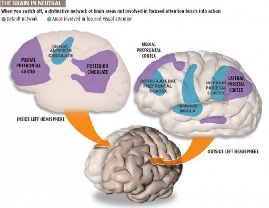 The Default Mode Network
